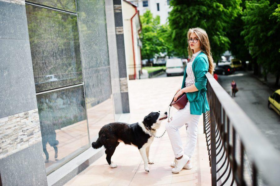 O que fazer em casos de proibição de cachorros e problemas com a administração do prédio?